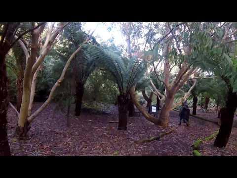 A Wander Round Logan Botanic Garden