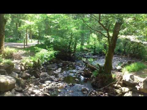 Aberfoyle, The Trossachs, Scotland