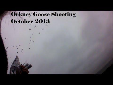 Shooting | Geese | Orkney 2013