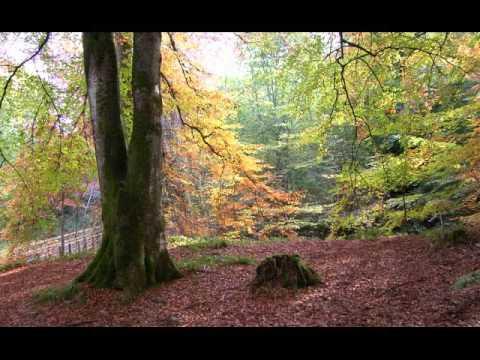 Birks Of Aberfeldy Perthshire Scotland