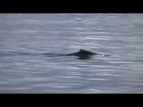 Nessie Footage Final Proof!