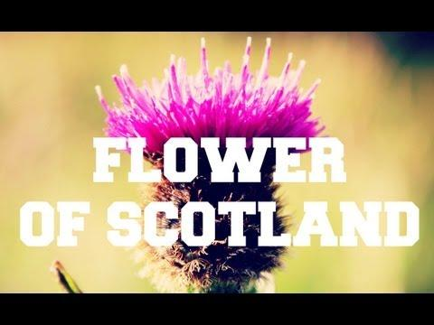 ♫ Scottish Music - Flower Of Scotland ♫