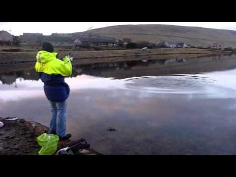 Shetland Shore Cod