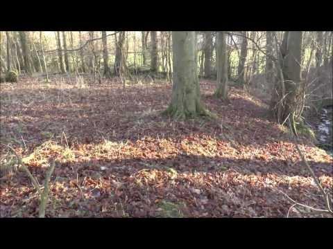 Money Does Grow On Trees, Metal Detecting Scotland's History Part 69