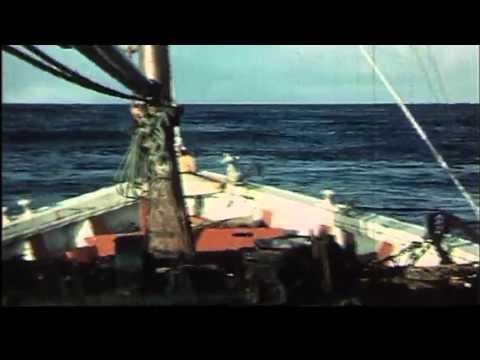 SEA ANGLING IN ORKNEY 1968 Part 1