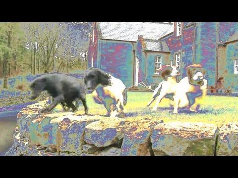 Fieldsports Britain - Drumlanrig Castle Dogs And The Search For Pigeons, Rabbits And Deer