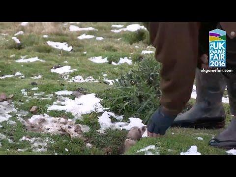 Rabbit Shooting Mania: Frantic Ferreting In The Scottish Borders