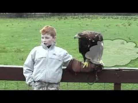 Birdman Of Aberfoyle - Campbell Crawford