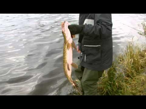 Pike Fishing Loch Venacher Scotland