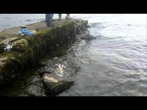 Loch Earn Fishing Trip