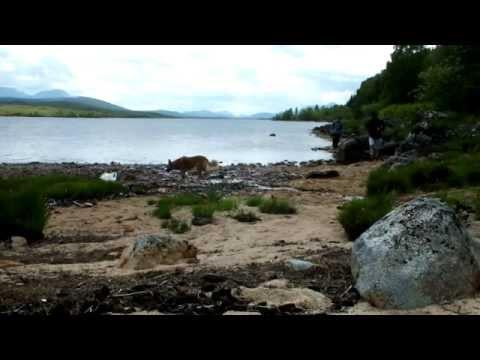Fishing Trip To Rannoch HD
