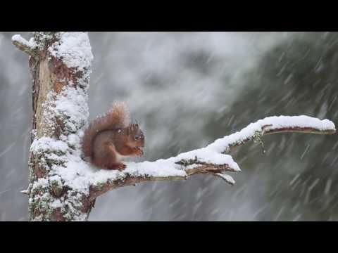 Squirrel – (c) SCOTLAND The Big Picture