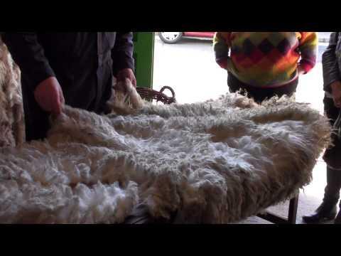 Shetland Wool Week 2014 - Grading Wool